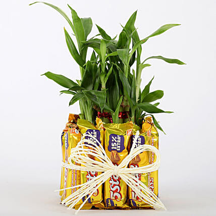 2 Layer Lucky Bamboo With 12 Chocolates: Send Plants for Valentines Day