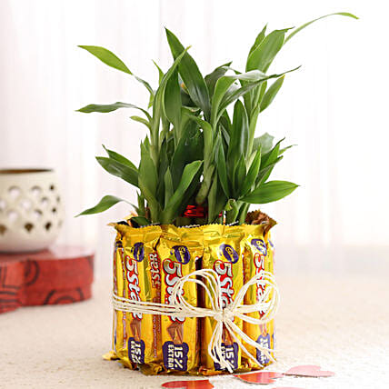 2 Layer Lucky Bamboo With 5 Star Chocolates: Send Plants for Valentines Day