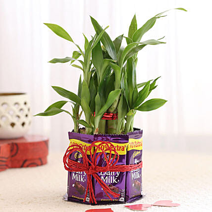 Two Layer Bamboo with Chocolates: Send Plants for Valentines Day
