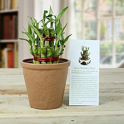 2 Layers Luck Bamboo Plant: Gifts for 75Th Anniversary