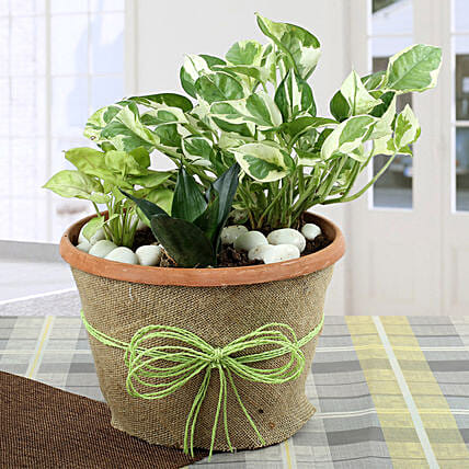 Air Purifying Dish Garden: Cactus and Succulents Plants