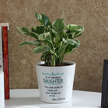 Attractive White Pothos Plant: Gifts for Daughters Day