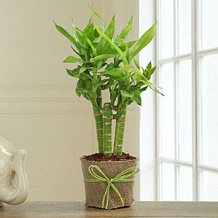 Bamboo Plant Decor: Gifts for Hug Day