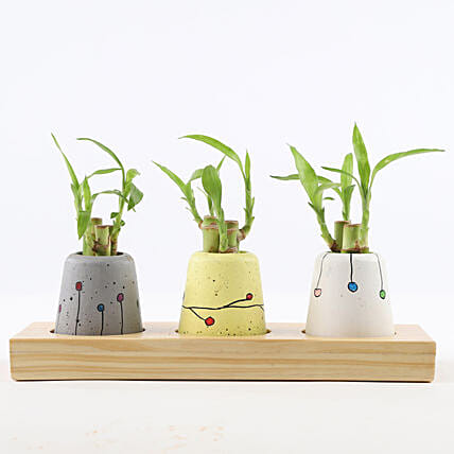 Bamboo Sticks In Mini Anar Concrete Pots: Office Desk Plants