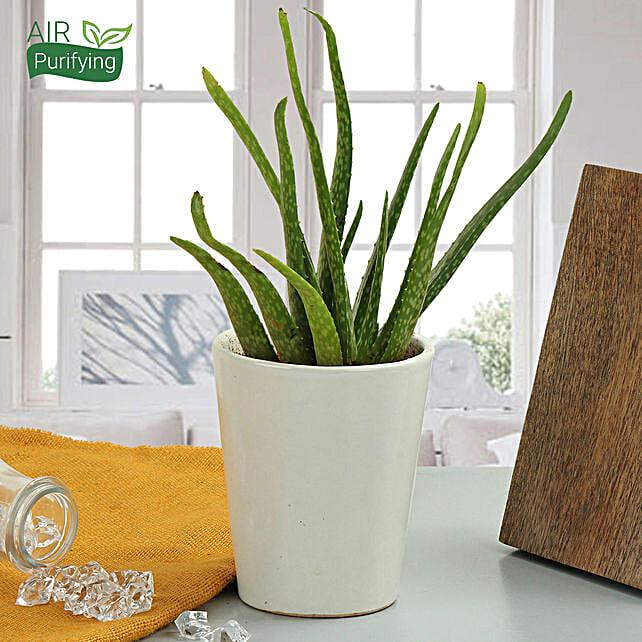 Beauty Of Aloe Vera Plant: Office Desk Plants