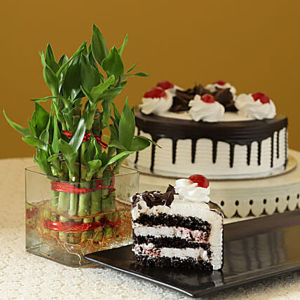 Blackforest Cake N Two Layer Bamboo Plant: Bamboo Plants