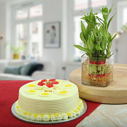 Butterscotch Cake With Bamboo Plant: Plant Combos