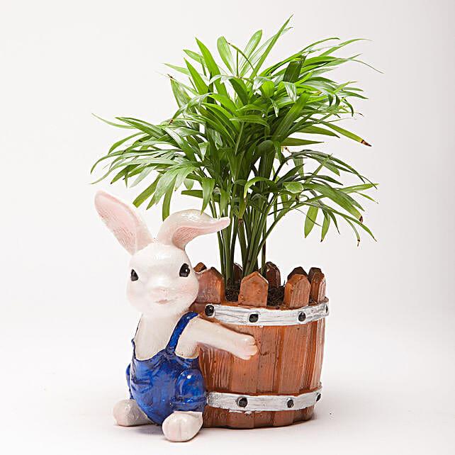 Chamaedorea Plant in Resin Rabbit Pot: Pots and Planters