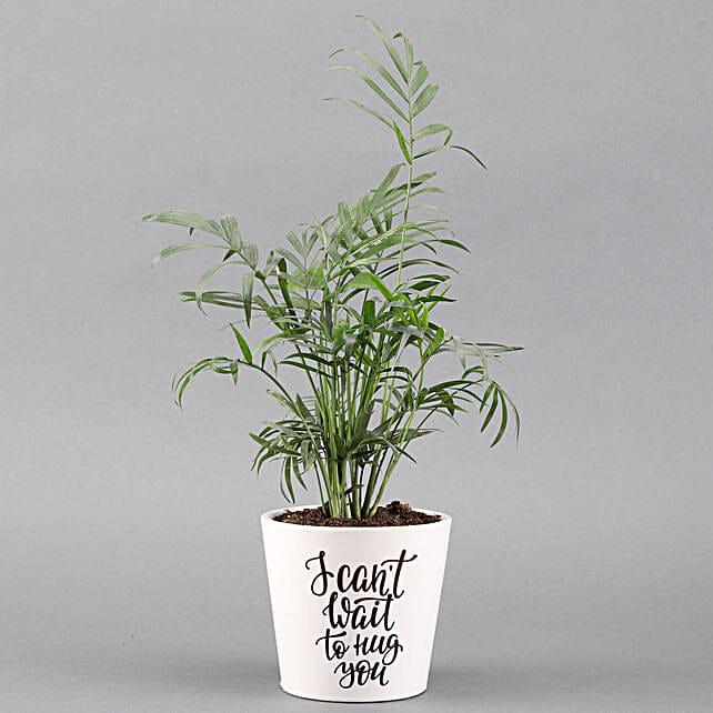 Chamaedorea Plant In White Ceramic Pot: Potted Plants