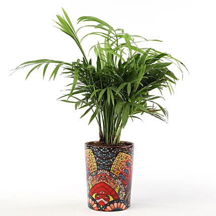 Chamaedorea Plant with Printed Ceramic Vase: Gifts to India