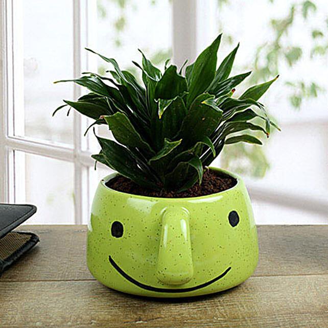 Dracaena Compacta In Smiley Vase: Send Shrubs