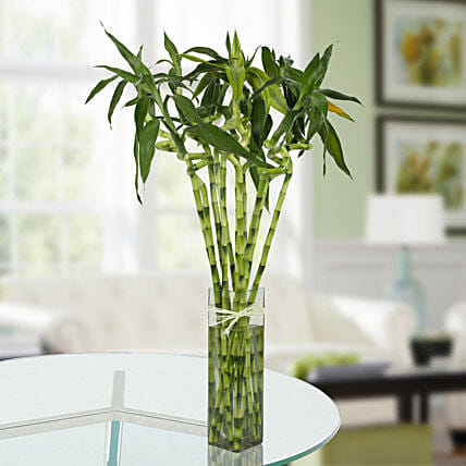 Order Lucky Bamboo For Birthday Online From Ferns N Petals
