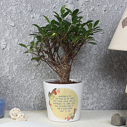 Ficus Bonsai Plant in Printed Pot: Potted Plants