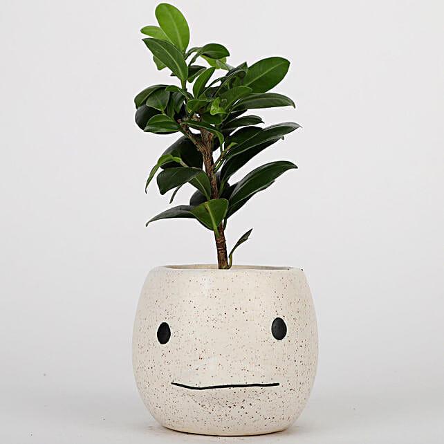 Ficus Plant In Cream White Ceramic Pot: Bonsai Plants