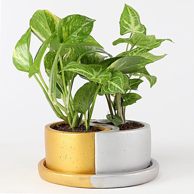 Foliage Plants In Yin Yang Ceramic Pot: Gift Ideas