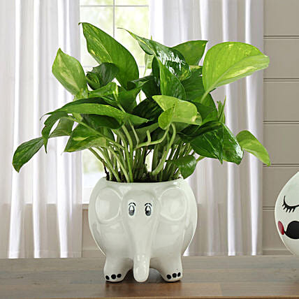 Freshen Up Money Plant: Send Spiritual Gifts