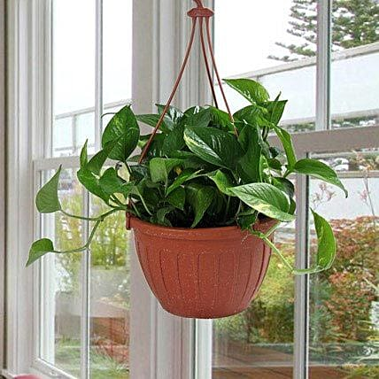 Go Green With Money Plant: