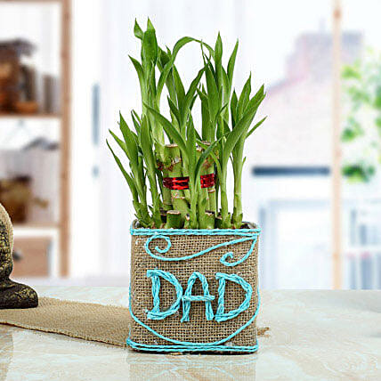 Good Luck Bamboo Plant for Dad: Gifts for Father