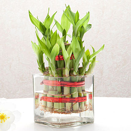 Good Luck Two Layer Bamboo Plant Birthday Gifts For Girlfriend