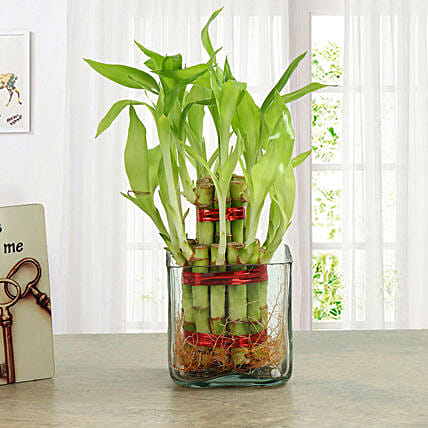 Good Luck Two Layer Bamboo Plant Birthday Gifts For Boyfriend
