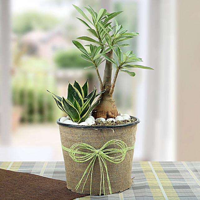 Green Home Decor Dish Garden: Cactus and Succulents Plants