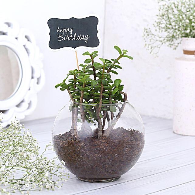 Happy Birthday Jade Plant Terrarium: Plant Combos