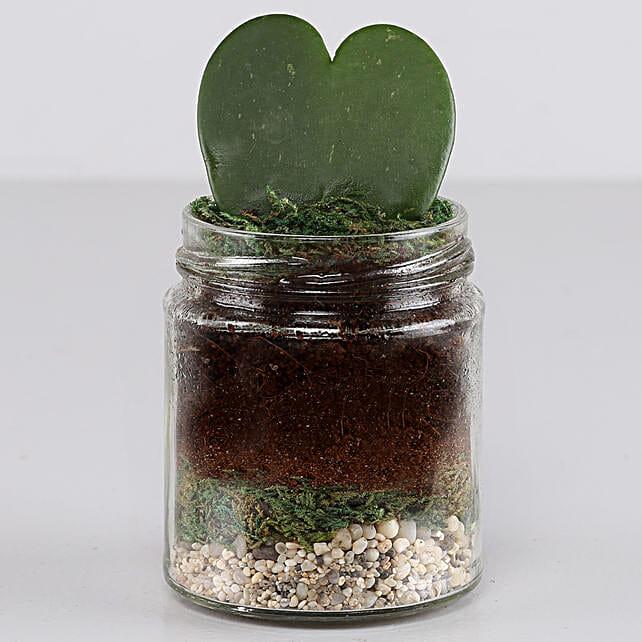 Hoya Plant Jar Terrarium: Rare Plant Gifts