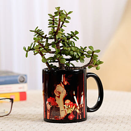 Jade Plant In Black Personalised Mug: