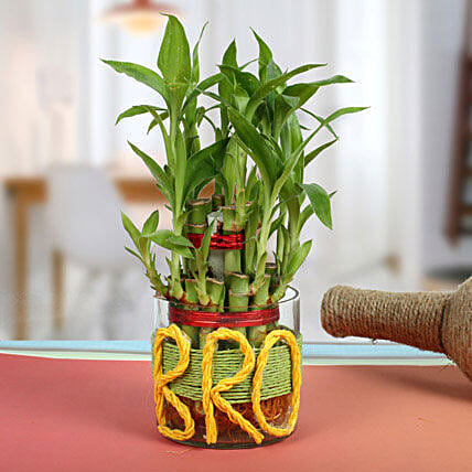 Lucky Bamboo For Brother: Exotic Plant Gifts