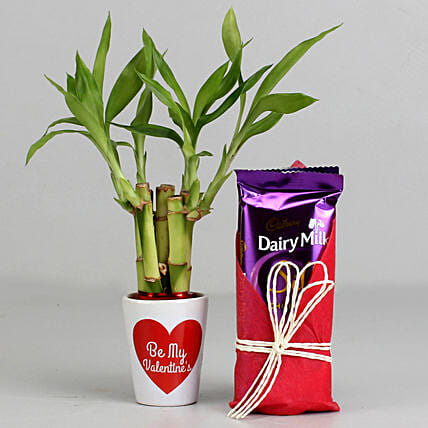 Lucky Bamboo Plant in Valentines Pot & Dairy Milk Silk: Cadbury Chocolates