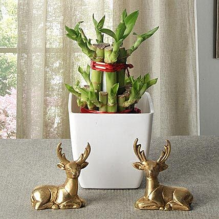 Lucky Bamboo With Deers: Rare Plant Gifts