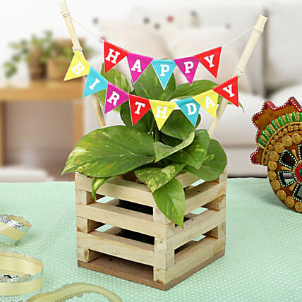 Make It Best Birthday Gift Send Plants For