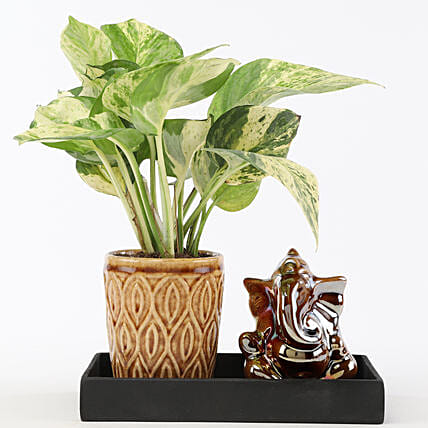 Marble Money Queen Plant In Ceramic Platter: Ornamental Plant Gifts