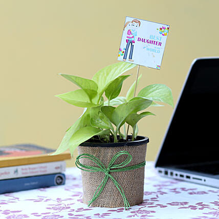 Money Plant For Daughter's Day: Gifts for Daughters Day