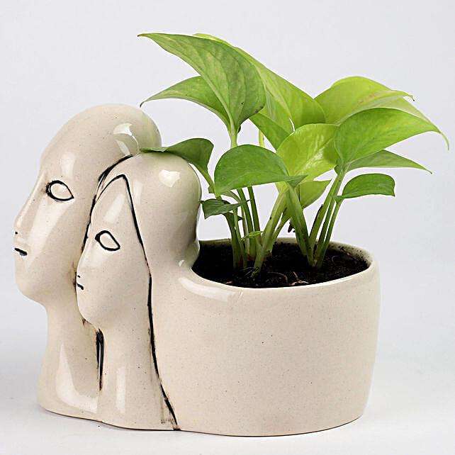 Money Plant in Couple Pot: Money Plant