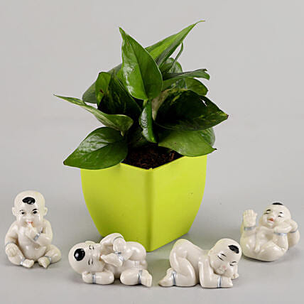 Money Plant in Green Pot & Baby Buddha Combo: Money Plant