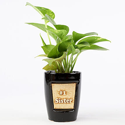 Money Plant In Number One Sister 3D Pot: Money Plant