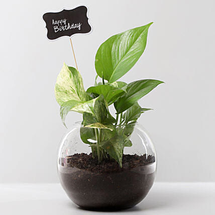 Money Plant Terrarium For Birthday: Outdoor Plants