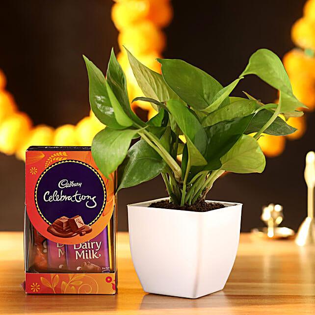 Money Plant With Cadbury Celebrations:
