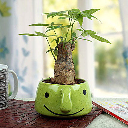 Pachira Bonsai In Smiley Vase: Send Spiritual Gifts