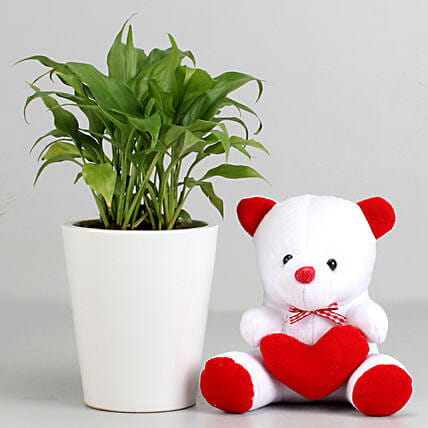 Peace Lily Plant in Ceramic Pot with Teddy Bear: Teddy Day Gifts