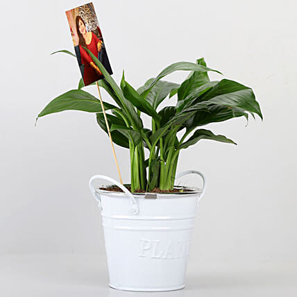 Peace lily Plant With Your Personalised Picture: Flowering Plants