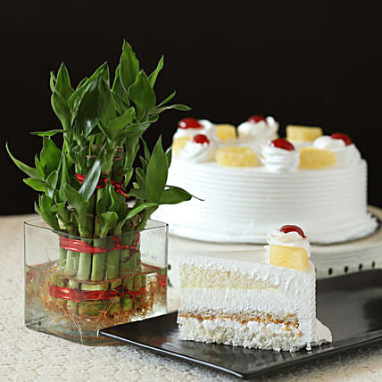 Pineapple Cake With Lucky Bamboo Plant: