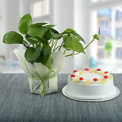Pineapple Cake With Money Plant: Cakes Combo