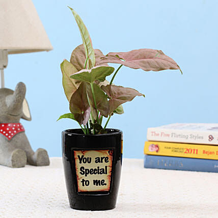 Pink Syngonium In You Are Special Pot: Good Luck Plants - Friendship Day