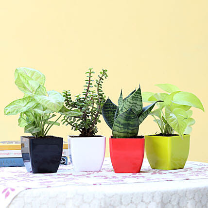 Foliage & Air Purifying Plant Set: Potted Plants