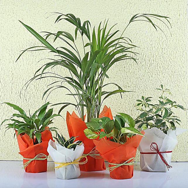 Set of 5 Exotic Green Plants: Send Shrubs