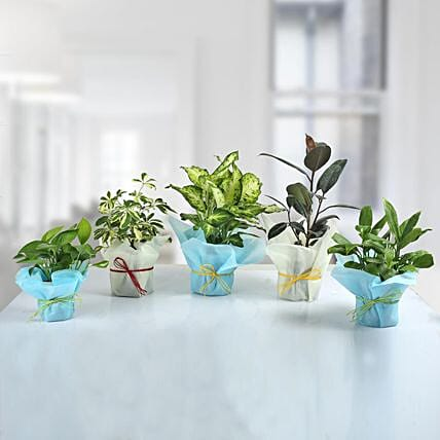 Set of 5 Refreshing Green Plants: Send Shrubs