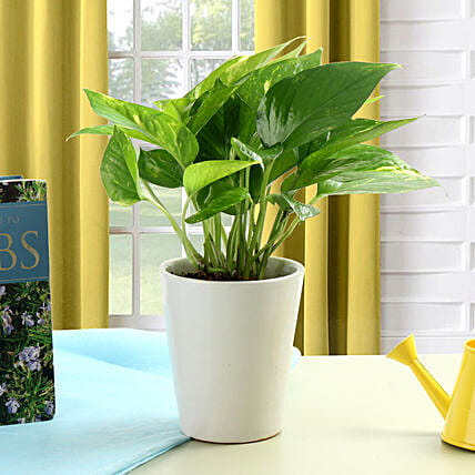 Striking Money Plant: Home Decor Anniversary Gifts