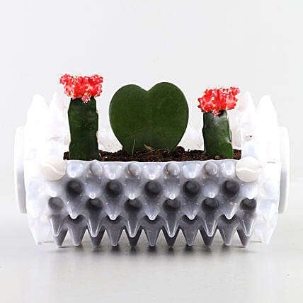 Succulents Combo In White Foldable Planter: Exotic Plant Gifts